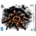 Samolepící dekory tarantule velká 1/10256
